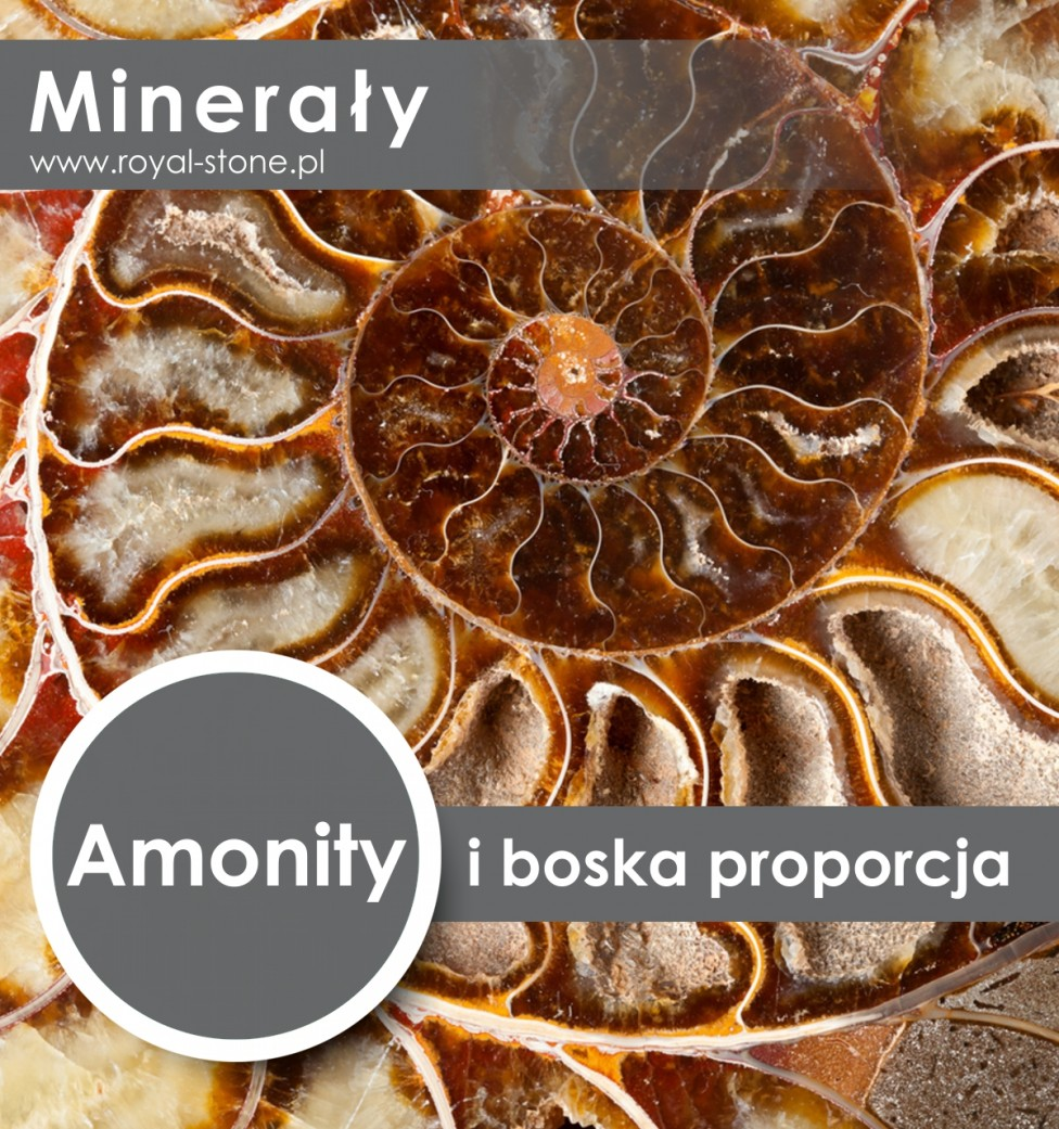 Amonity i boska proporcja złoty podział Royal-Stone okładka tytułowa