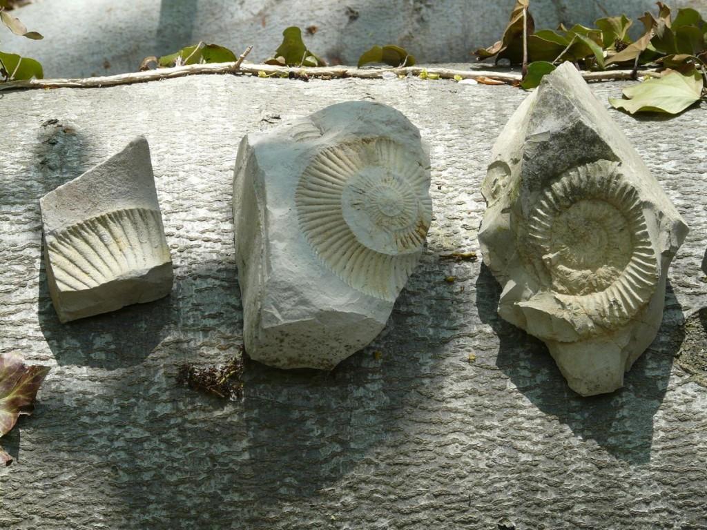 Royal-Stone skały jurajskie