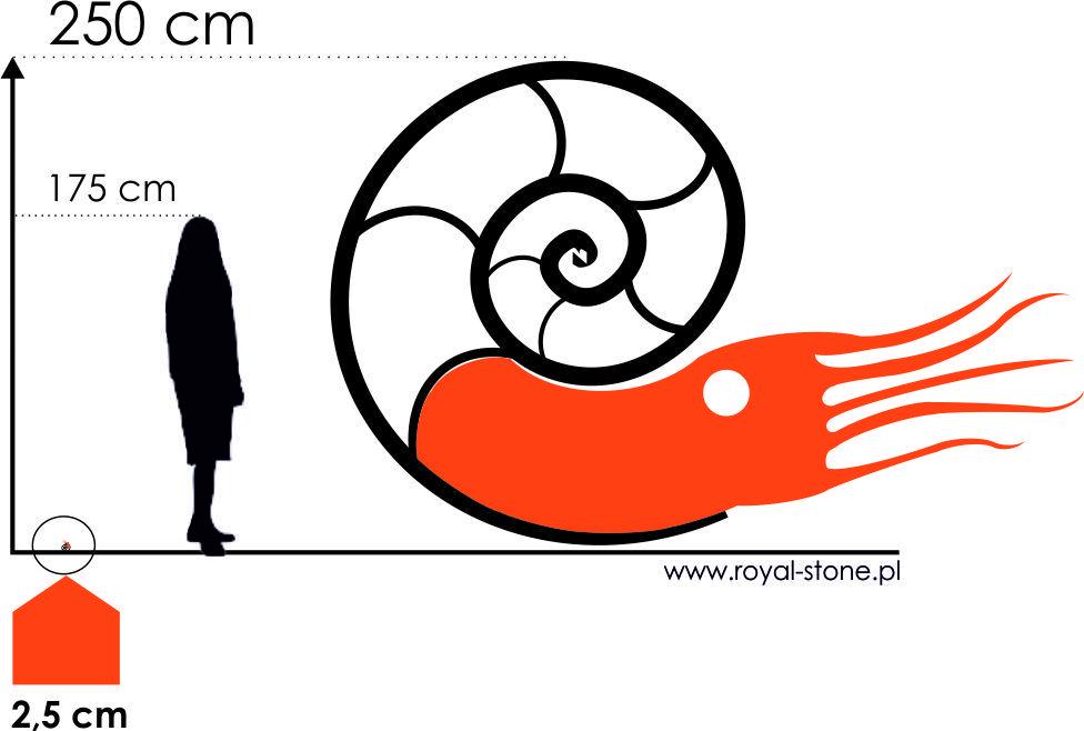 Royal-Stone wielkość amonitów
