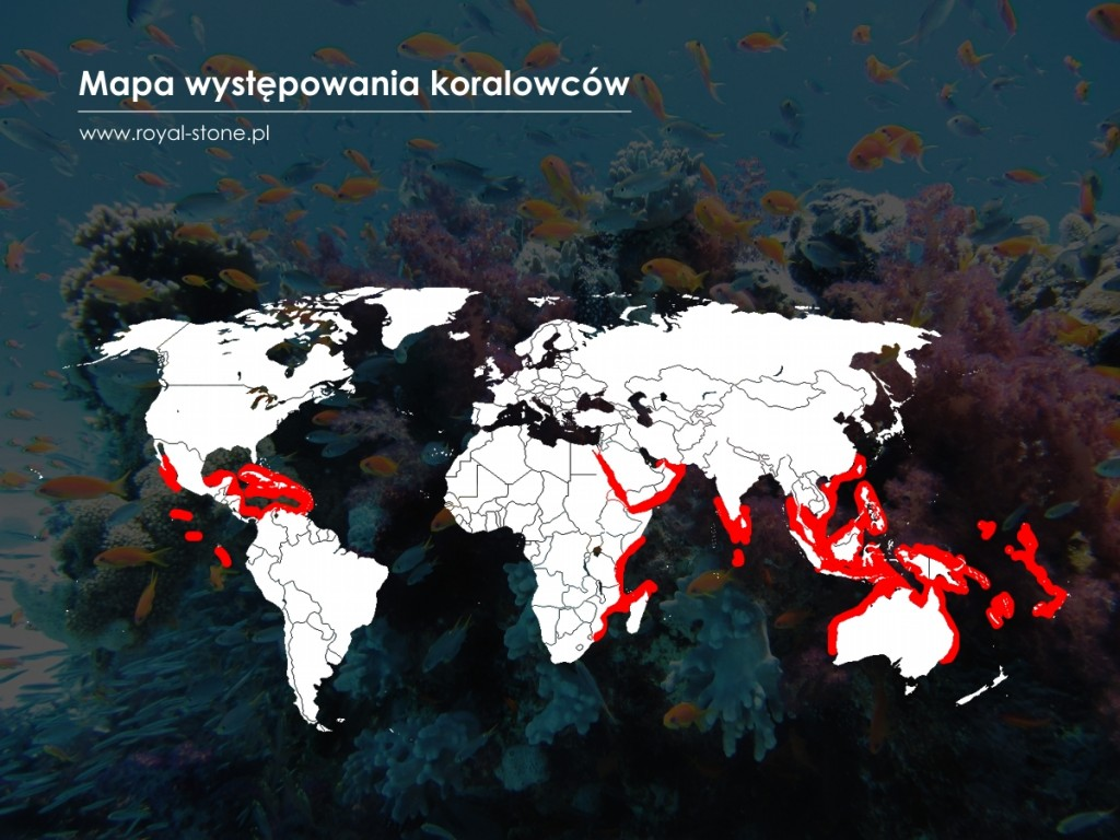 koral_korale_Royal-Stone_mapa