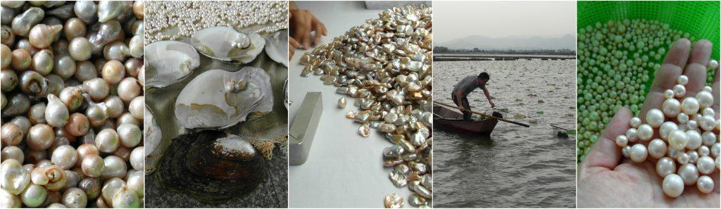 Jak powstają perły na farmach hodowlanych?